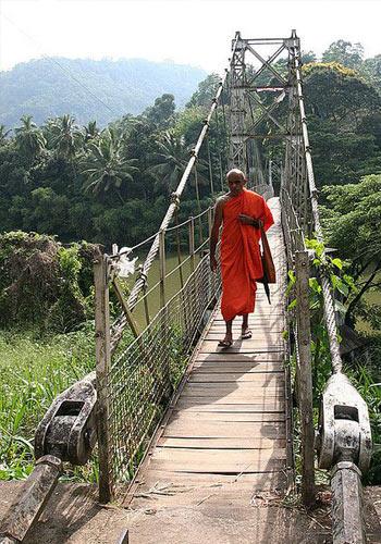 монах в ботаническом саду