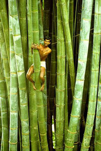 ботанический сад Шри-Ланки
