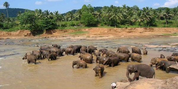 питомник слонов Шри-Ланка